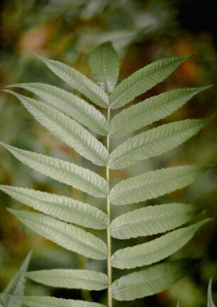Moisture-sensor til dine planter