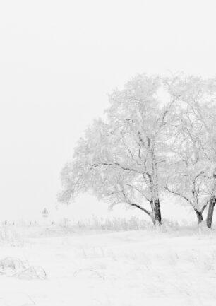 Vinter spillet – Noob To Master